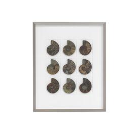 NATURAL CRETACEOUS AMMONITES WALL ART, , hi-res