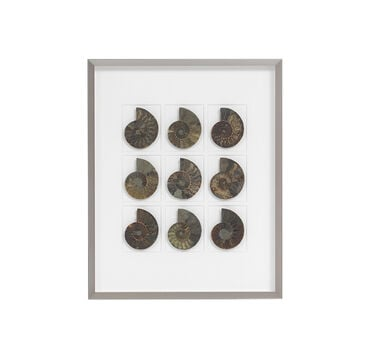 NATURAL CRETACEOUS AMMONITES WALL ART, , hi-res