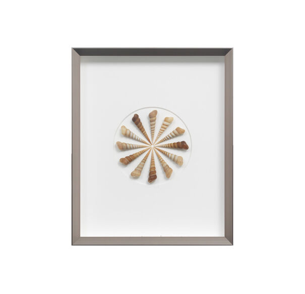 NATURAL TEREBRA COIL WALL ART, , hi-res