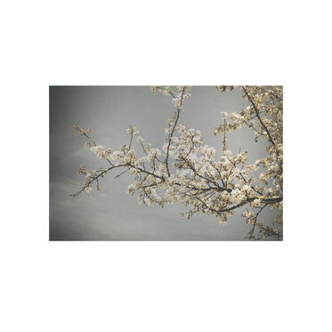 CHERRY BLOSSOM WALL ART, , hi-res